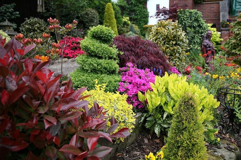 Цветочно-декоративные растения и цветы для сада